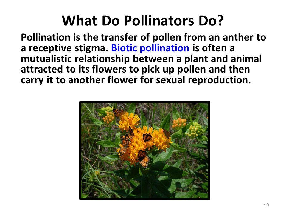 What Do Pollinators Do