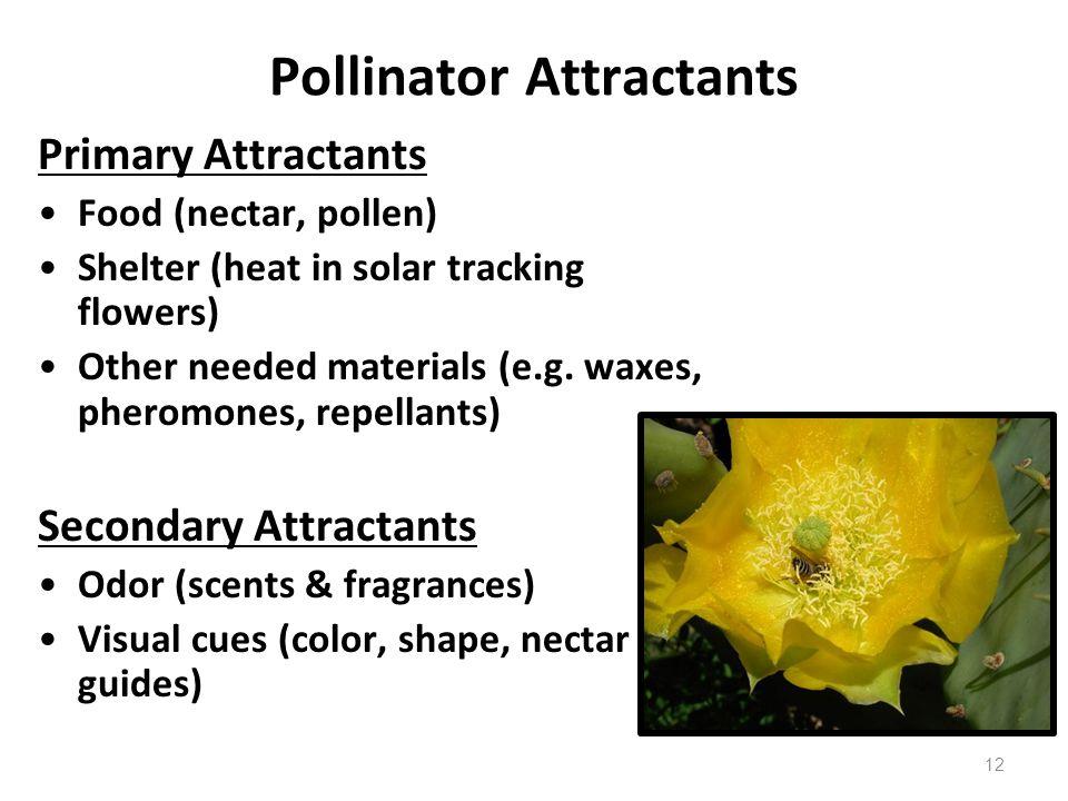 Pollinator Attractants