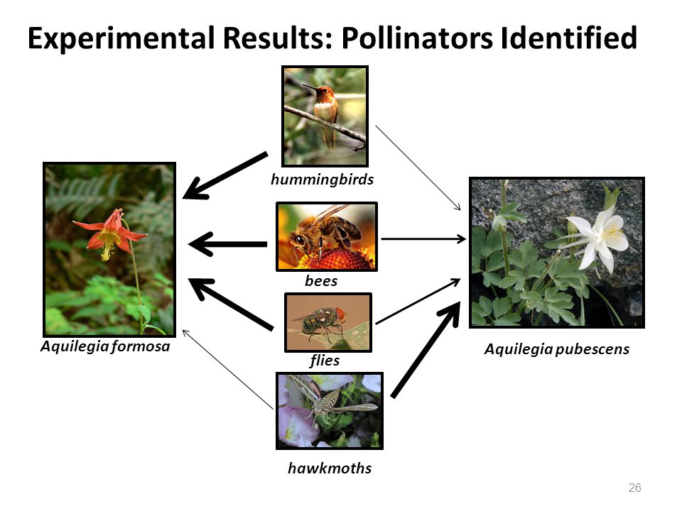 Experimental Results: Pollinators Identified