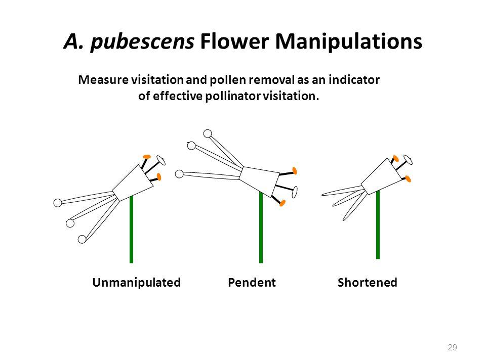 A. pubescens Flower Manipulations