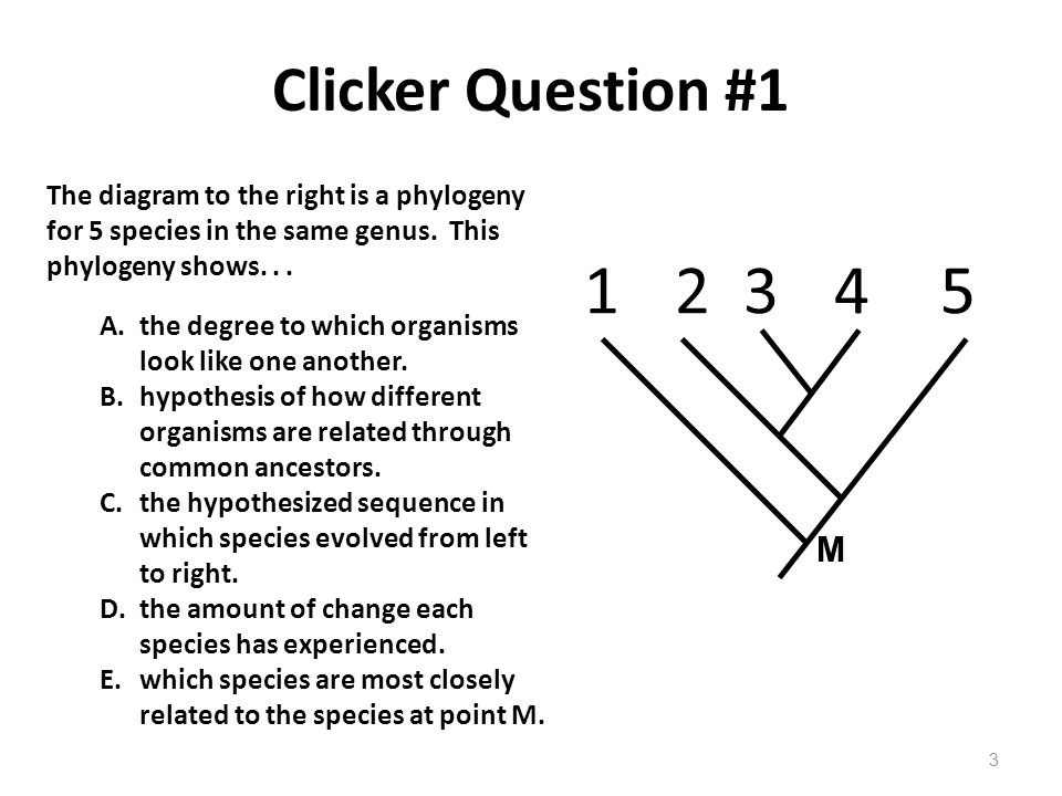 Clicker Question #1 The diagram to the right is a phylogeny for 5 species in the same genus. This phylogeny shows. . .