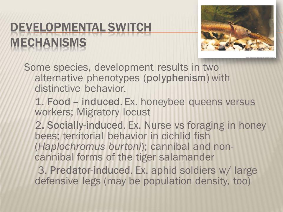 Developmental Switch Mechanisms