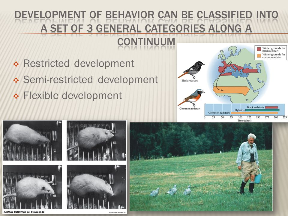 development of behavior can be classified into a set of 3 general categories along a continuum