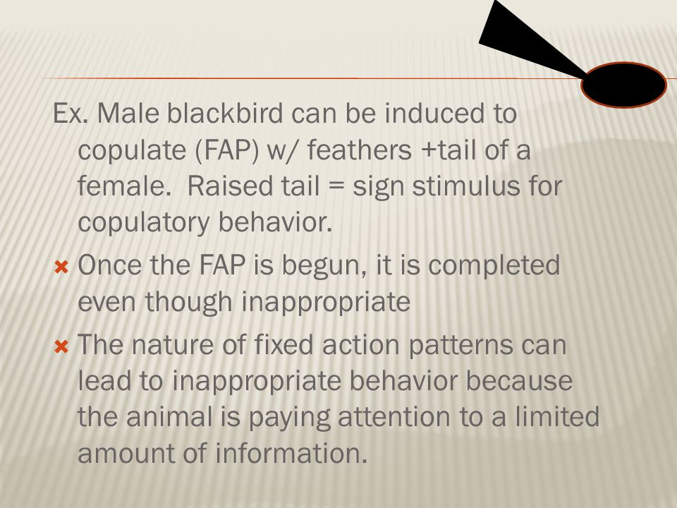 Ex. Male blackbird can be induced to copulate (FAP) w/ feathers +tail of a female. Raised tail = sign stimulus for copulatory behavior.
