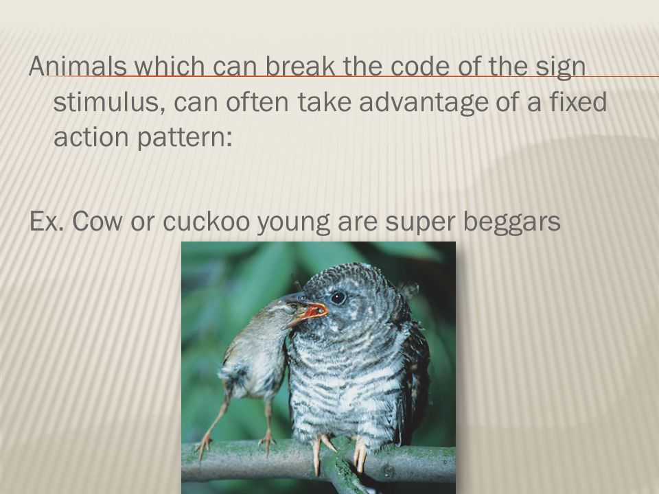 Animals which can break the code of the sign stimulus, can often take advantage of a fixed action pattern: