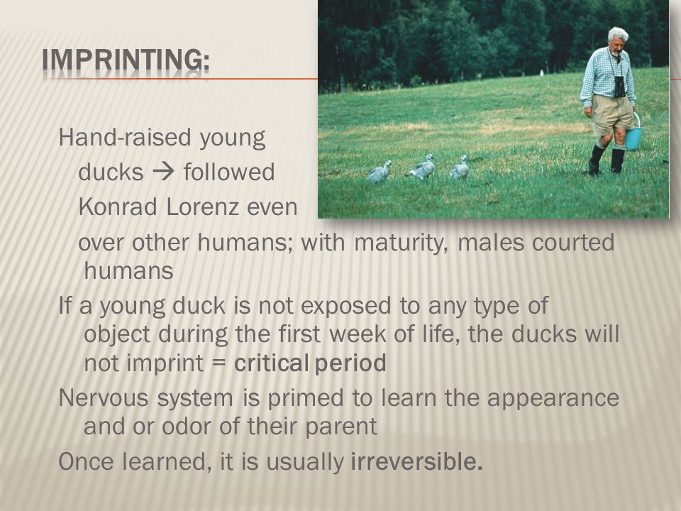 Imprinting: