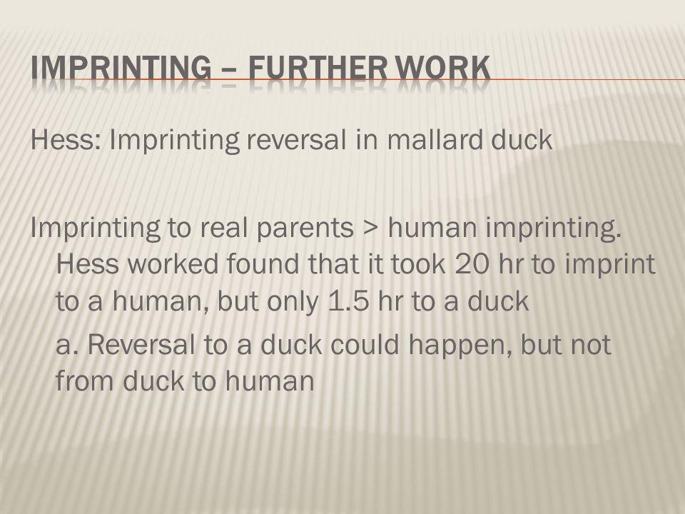 Imprinting – further work