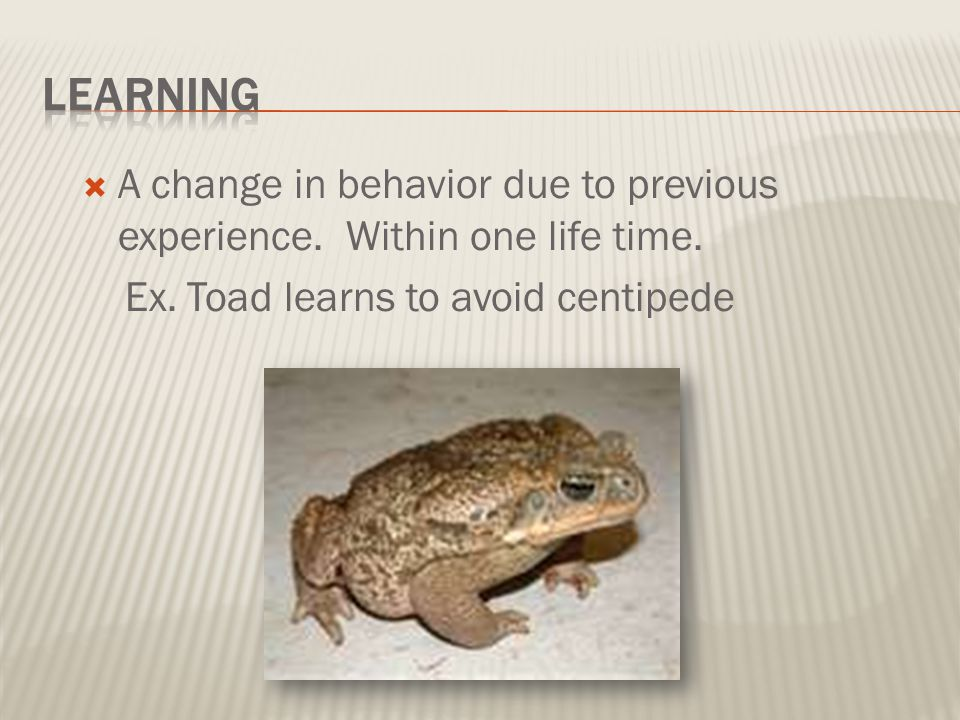 Learning A change in behavior due to previous experience.