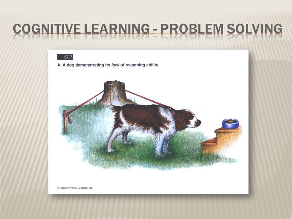 Cognitive Learning - Problem Solving
