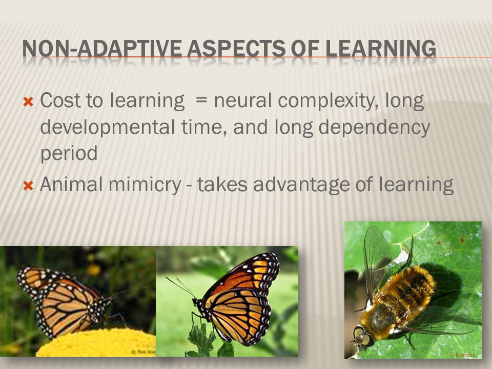 Non-adaptive Aspects of Learning