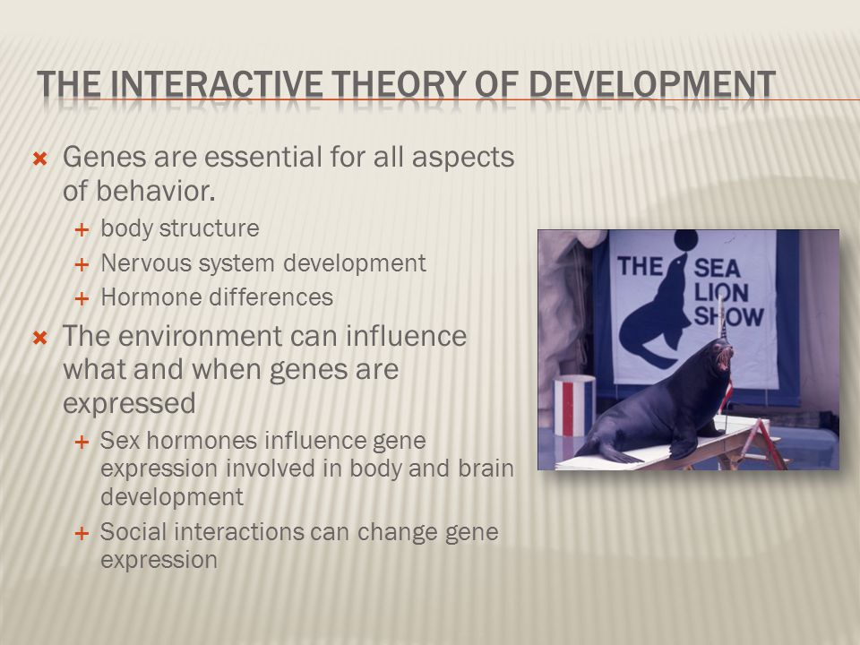 The Interactive Theory of Development