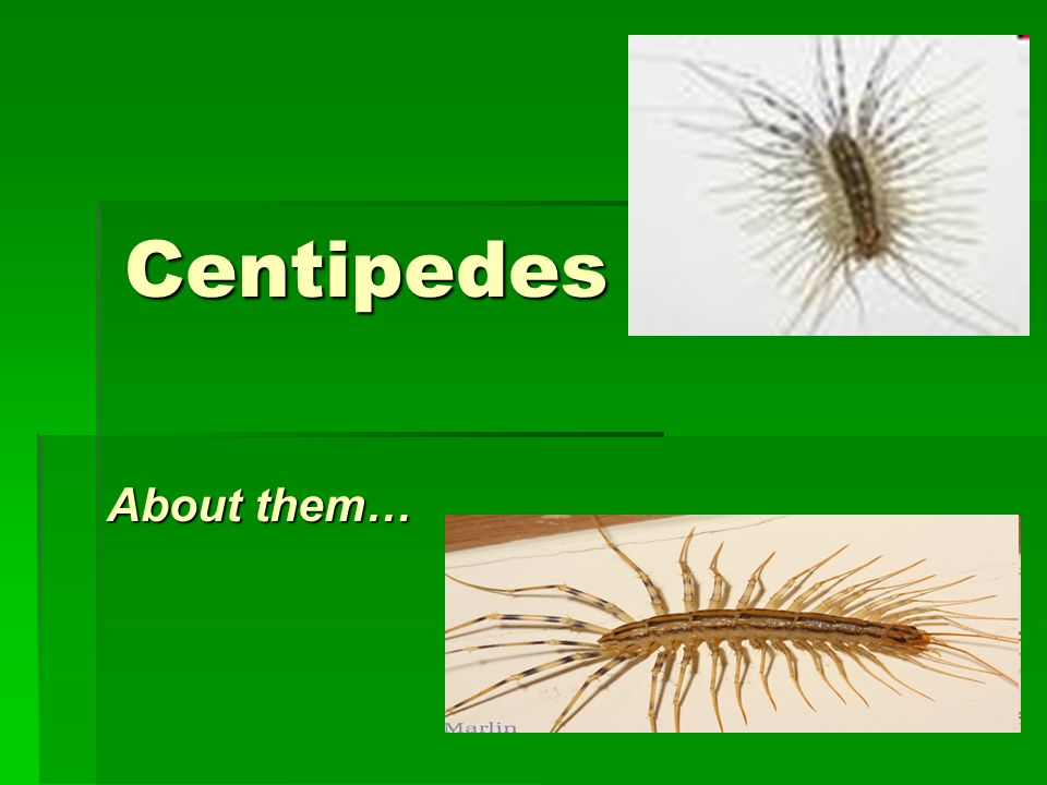 Centipedes About them…