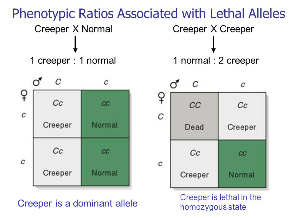 Phenotypic Ratios Associated with Lethal Alleles