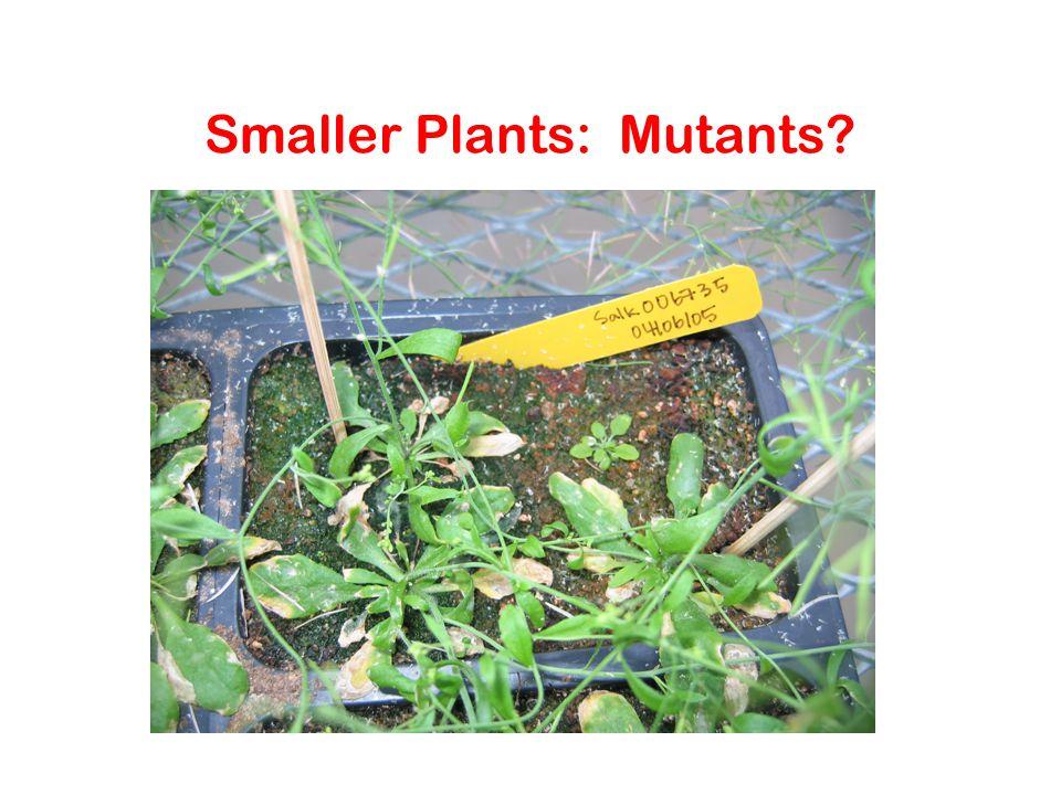 Smaller Plants: Mutants