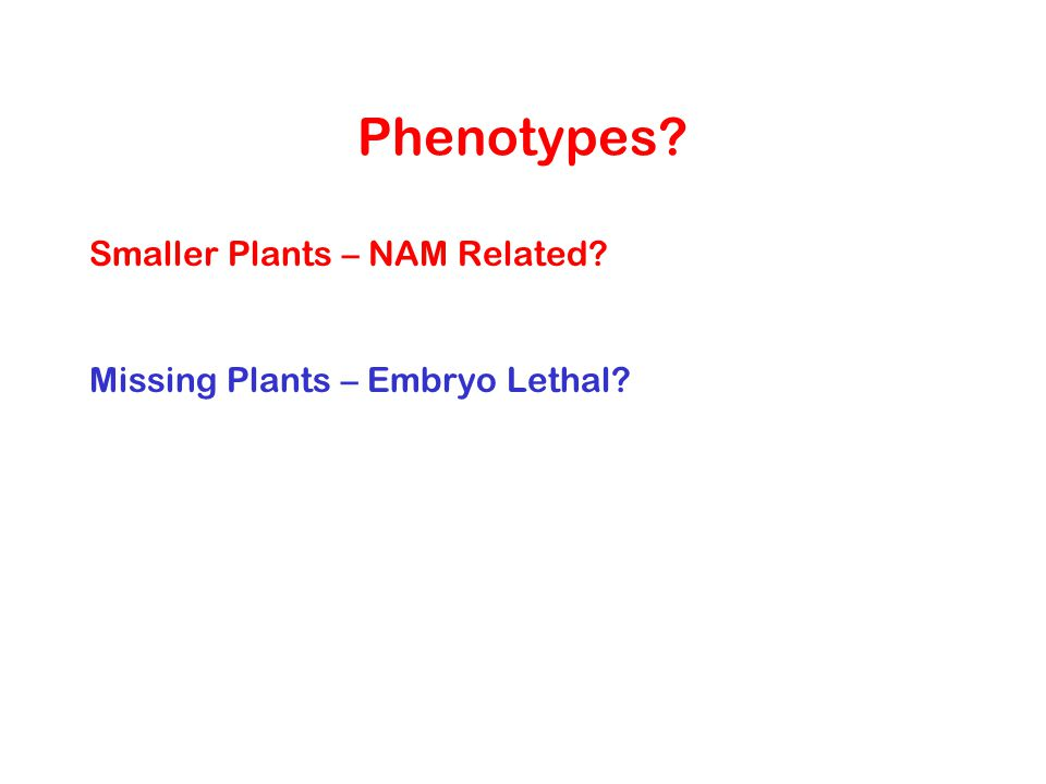 Phenotypes Smaller Plants – NAM Related
