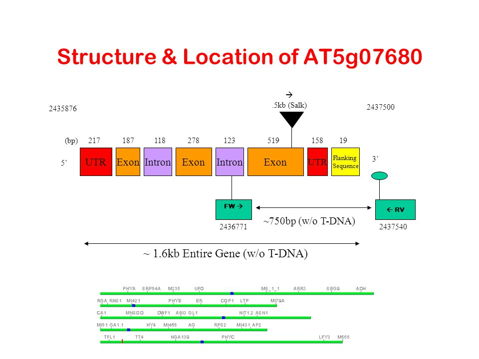 Structure & Location of AT5g07680