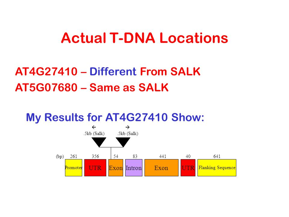 Actual T-DNA Locations