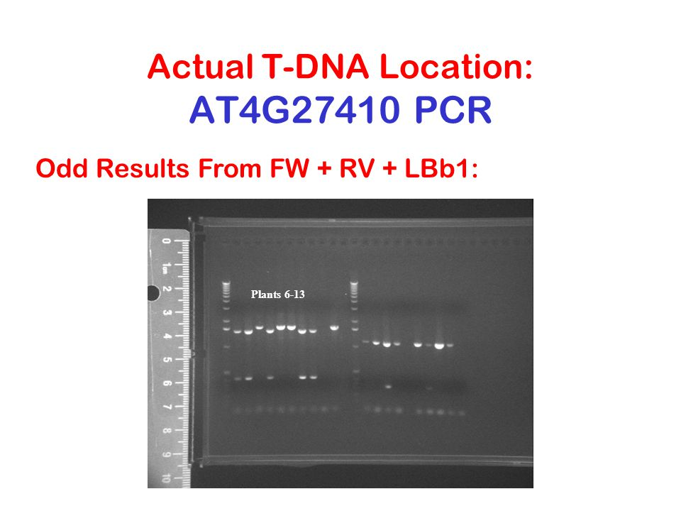 Actual T-DNA Location: AT4G27410 PCR