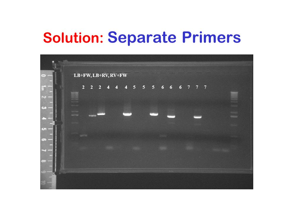 Solution: Separate Primers