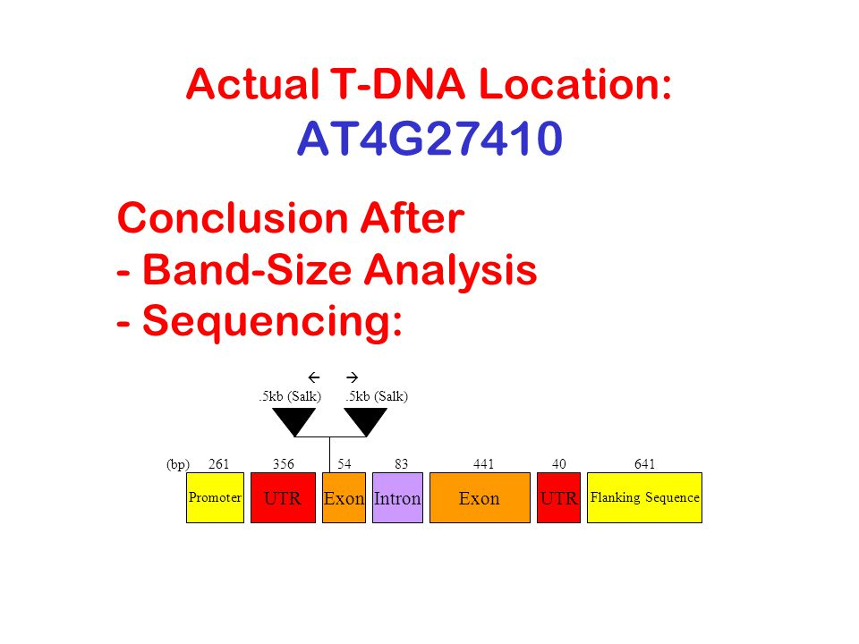 Actual T-DNA Location: AT4G27410