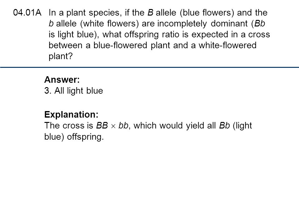 04.01A In a plant species, if the B allele (blue flowers) and the b allele (white flowers) are incompletely dominant (Bb is light blue), what offspring ratio is expected in a cross between a blue-flowered plant and a white-flowered plant