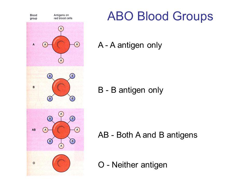 ABO Blood Groups A - A antigen only B - B antigen only
