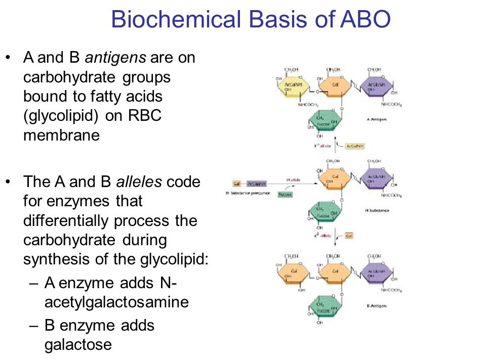 Biochemical Basis of ABO