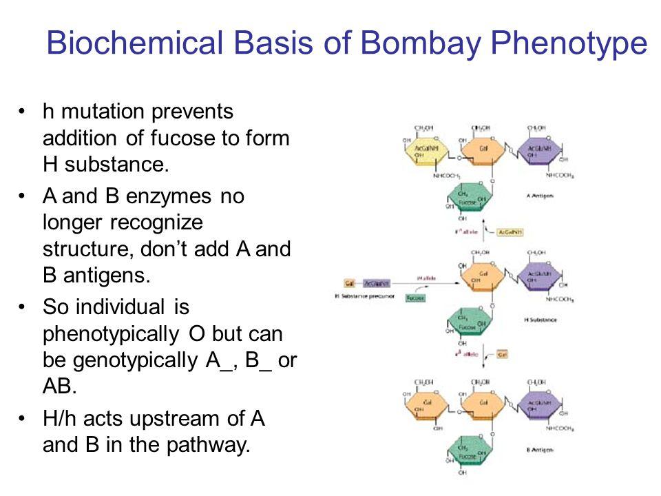 Biochemical Basis of Bombay Phenotype