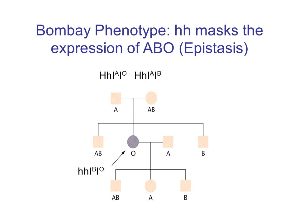 Bombay Phenotype: hh masks the expression of ABO (Epistasis)