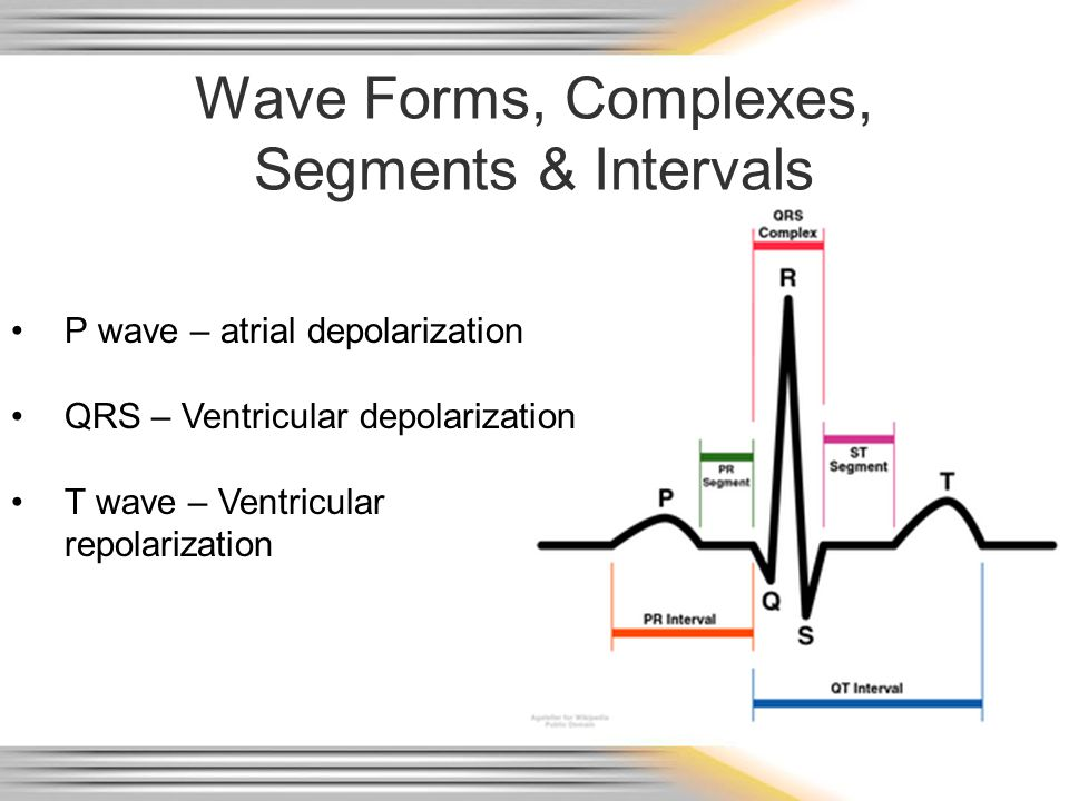 Wave Forms, Complexes, Segments & Intervals