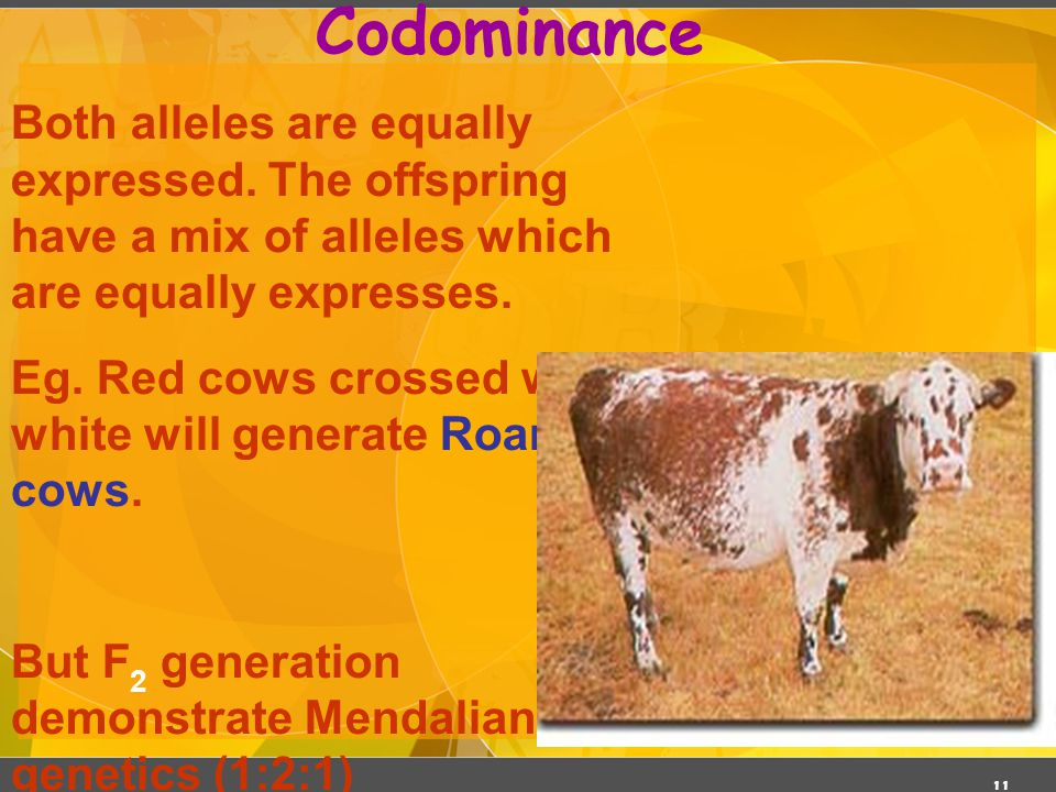 Codominance 03/06/11. Both alleles are equally expressed. The offspring have a mix of alleles which are equally expresses.