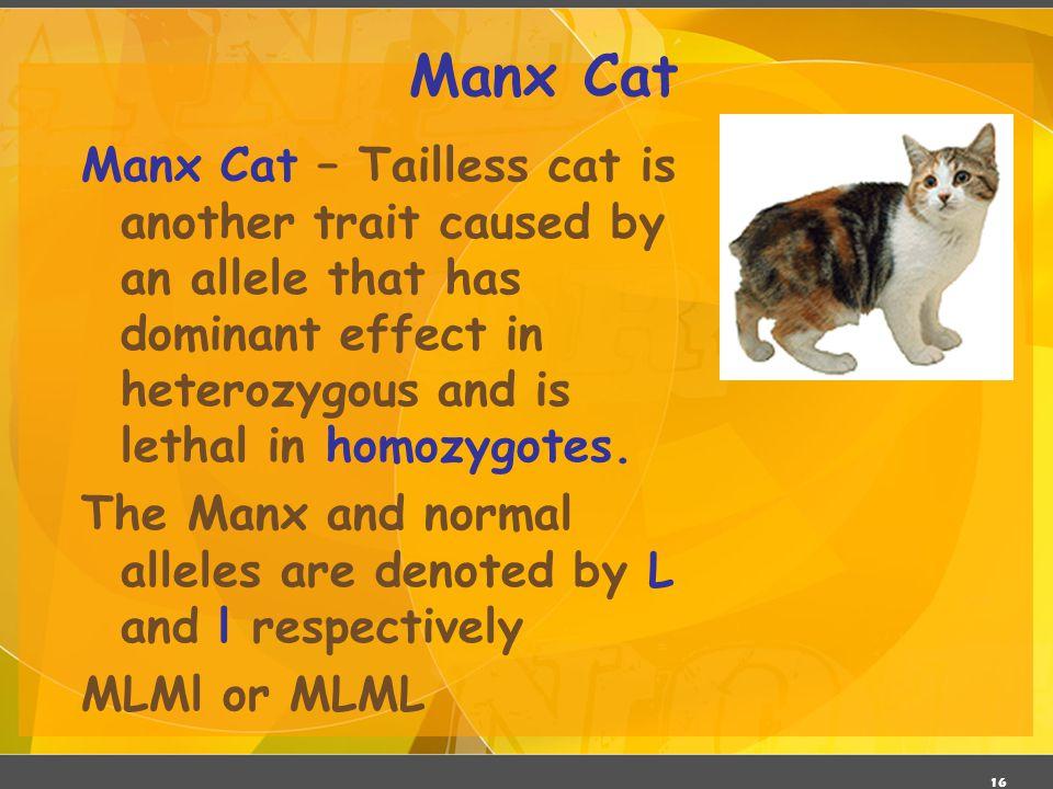 03/06/11 Manx Cat.