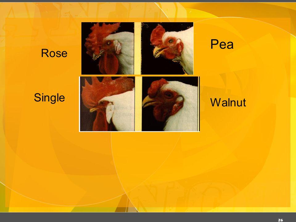 03/06/11 Pea Rose Single Walnut