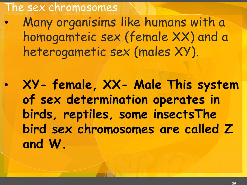 The sex chromosomes 03/06/11. Many organisims like humans with a homogamteic sex (female XX) and a heterogametic sex (males XY).