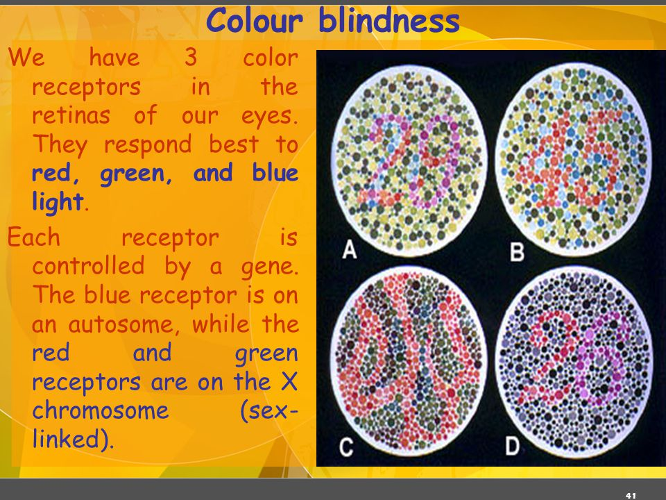 Colour blindness 03/06/11. We have 3 color receptors in the retinas of our eyes. They respond best to red, green, and blue light.