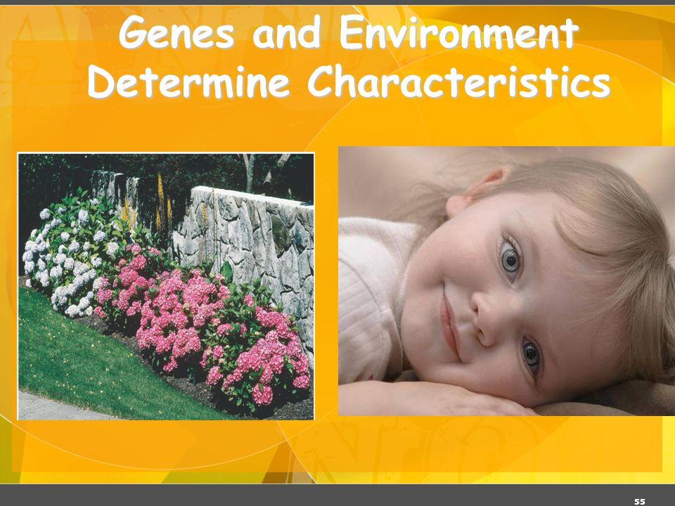 Genes and Environment Determine Characteristics