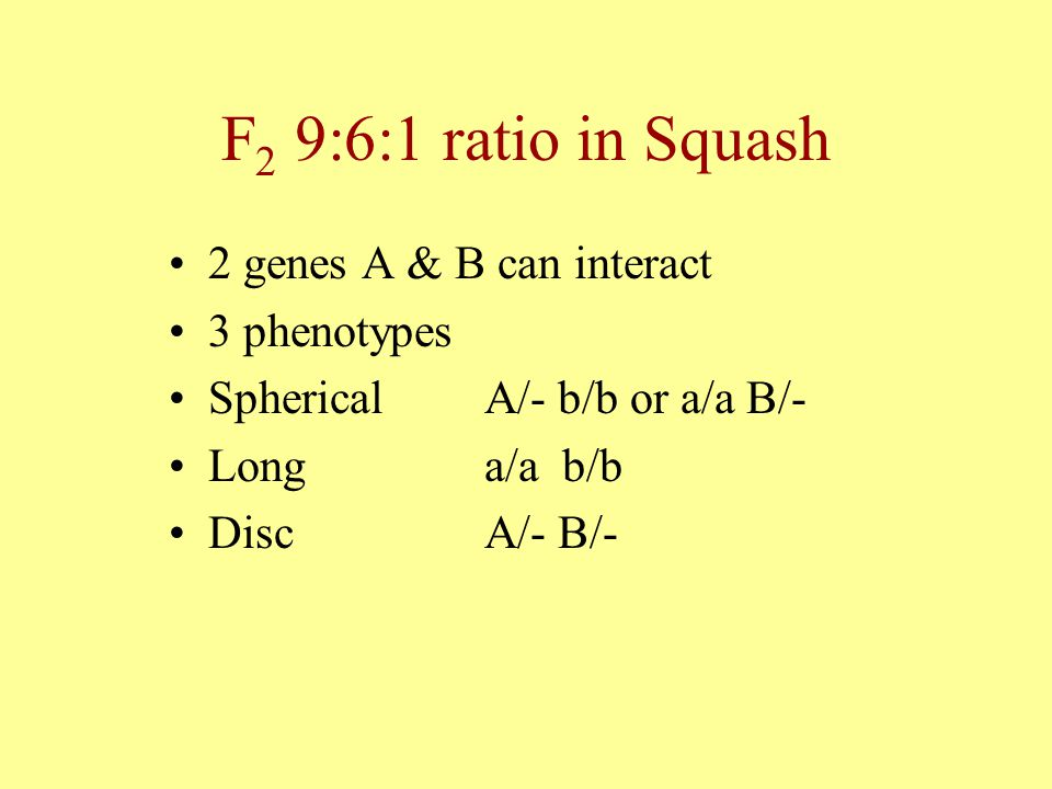 F2 9:6:1 ratio in Squash 2 genes A & B can interact 3 phenotypes