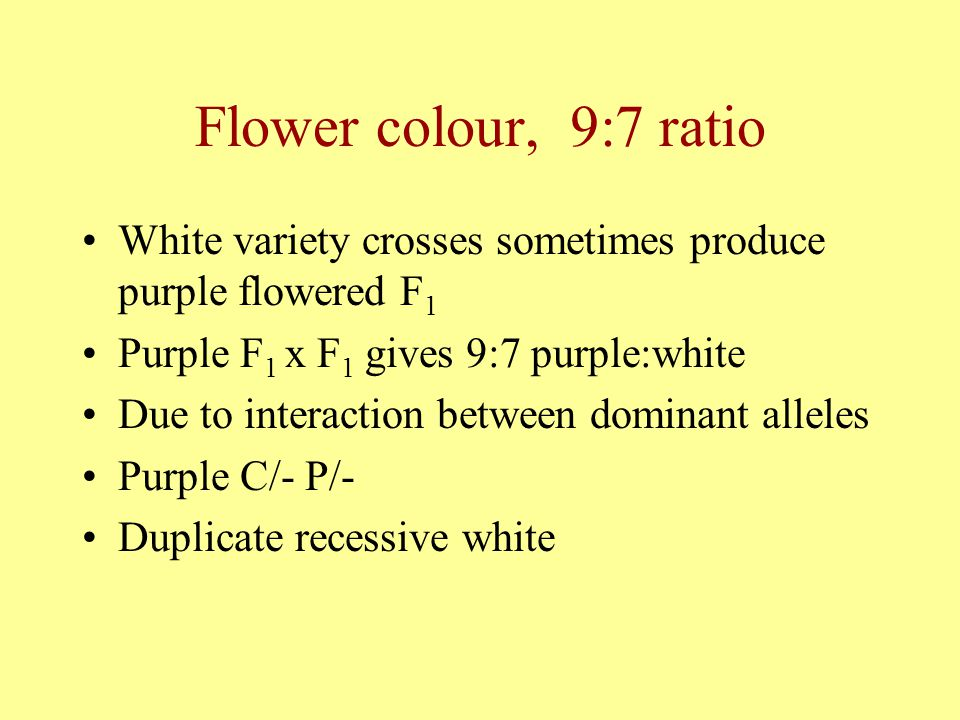 Flower colour, 9:7 ratio White variety crosses sometimes produce purple flowered F1. Purple F1 x F1 gives 9:7 purple:white.
