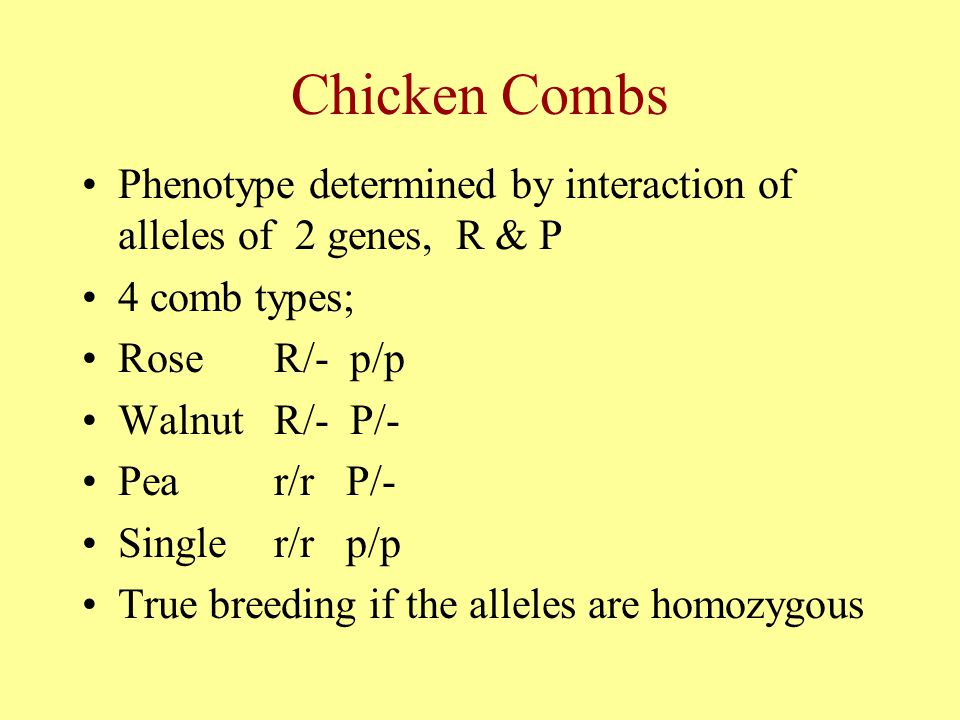 Chicken Combs Phenotype determined by interaction of alleles of 2 genes, R & P. 4 comb types; Rose R/- p/p.