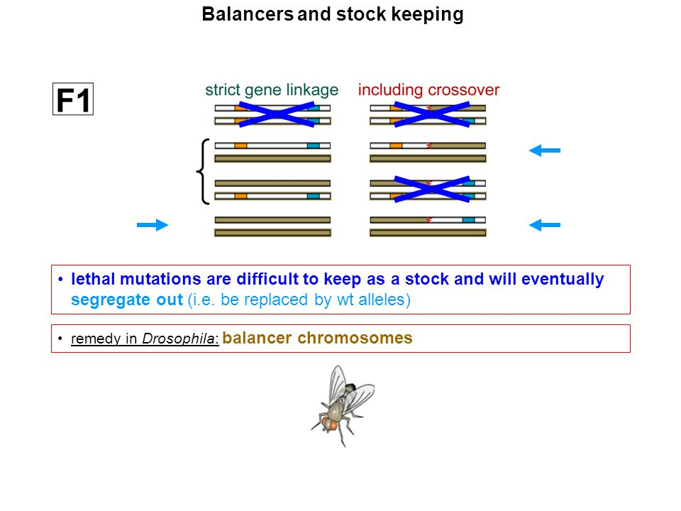 Balancers and stock keeping