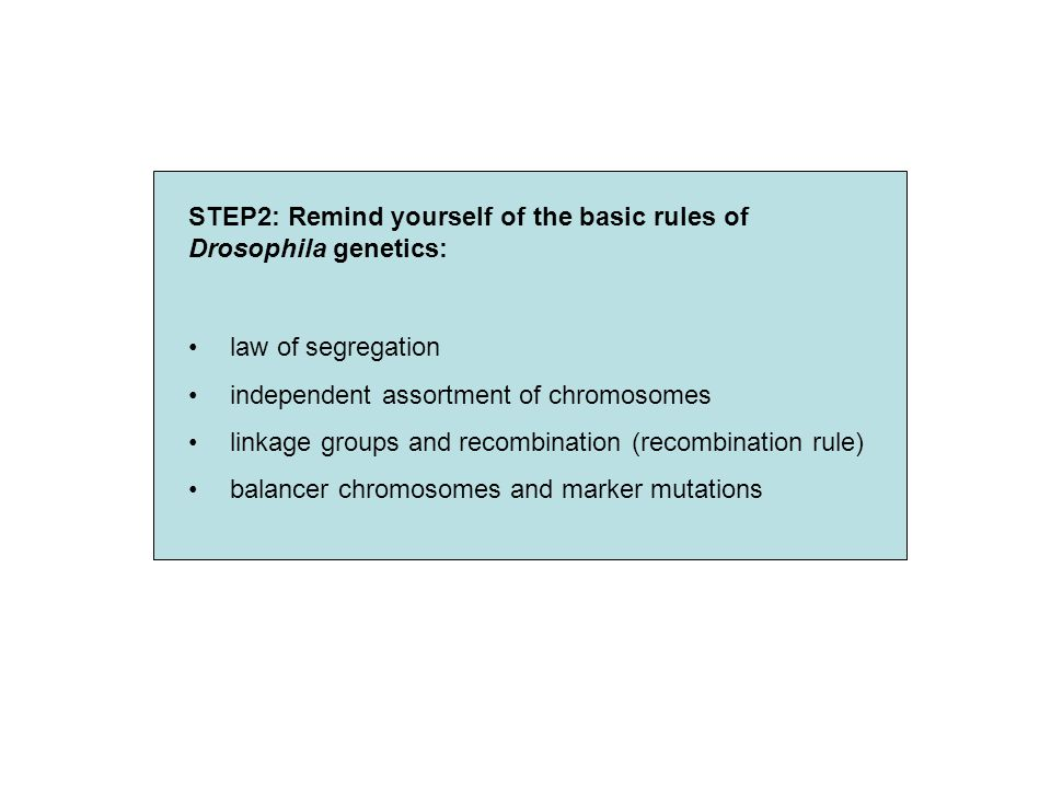 STEP2: Remind yourself of the basic rules of Drosophila genetics: