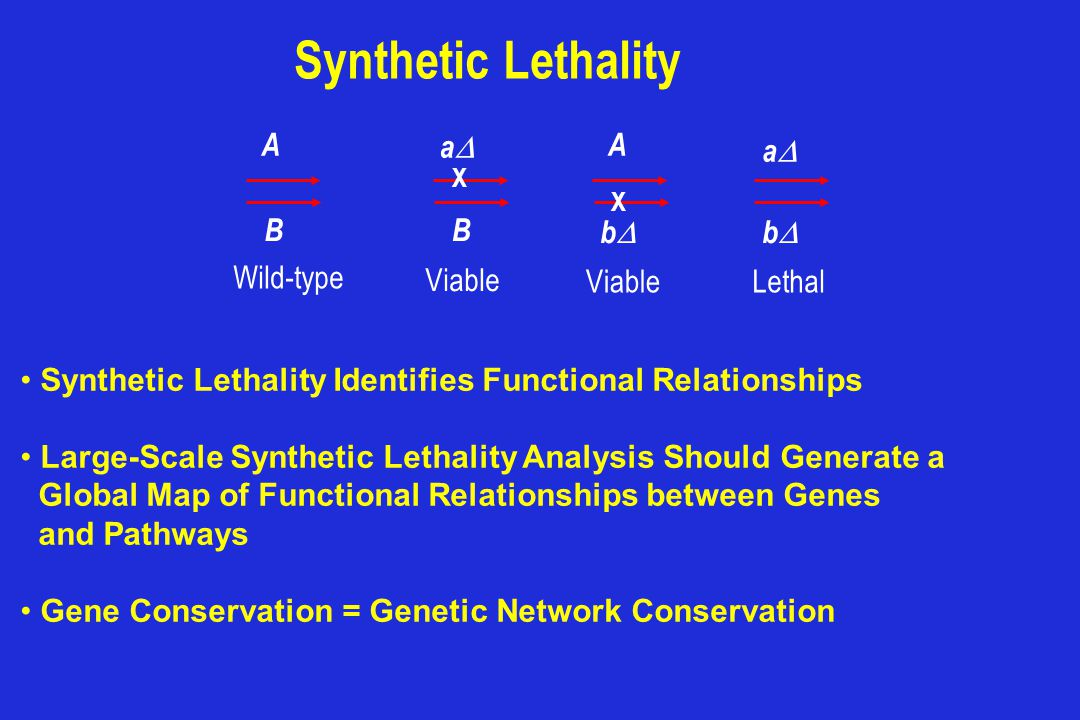 Synthetic Lethality A aD B bD Wild-type Viable Lethal
