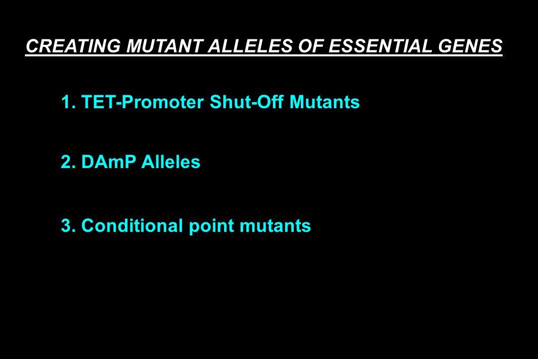 CREATING MUTANT ALLELES OF ESSENTIAL GENES