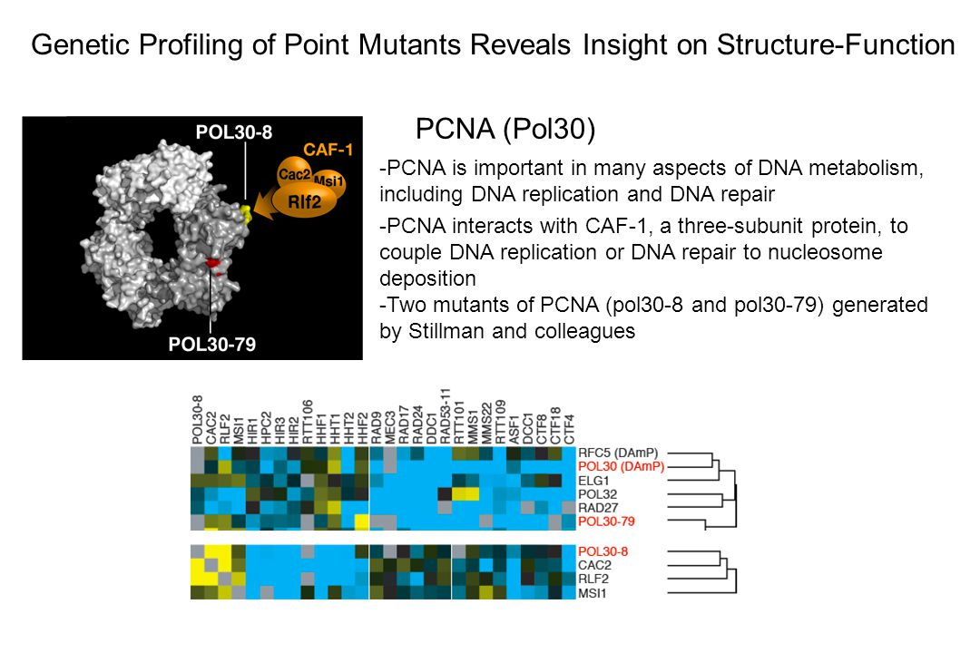Genetic Profiling of Point Mutants Reveals Insight on Structure-Function
