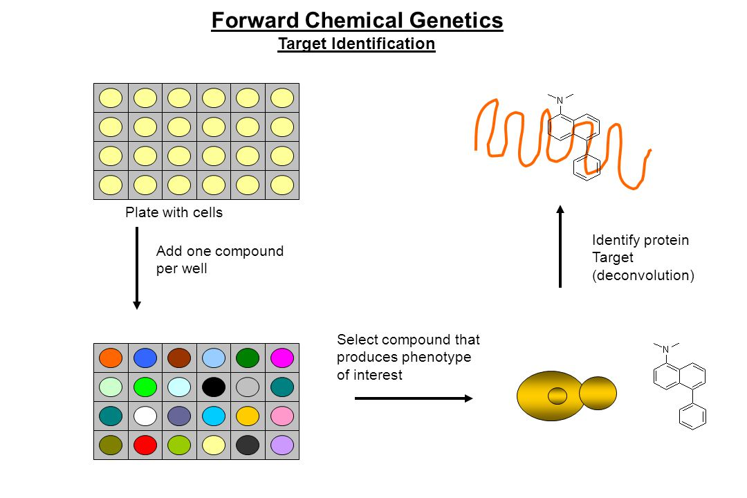 Forward Chemical Genetics Target Identification