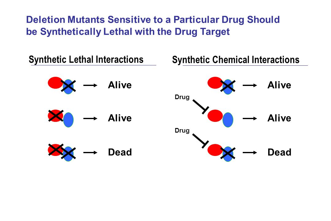 Synthetic Lethal Interactions Synthetic Chemical Interactions