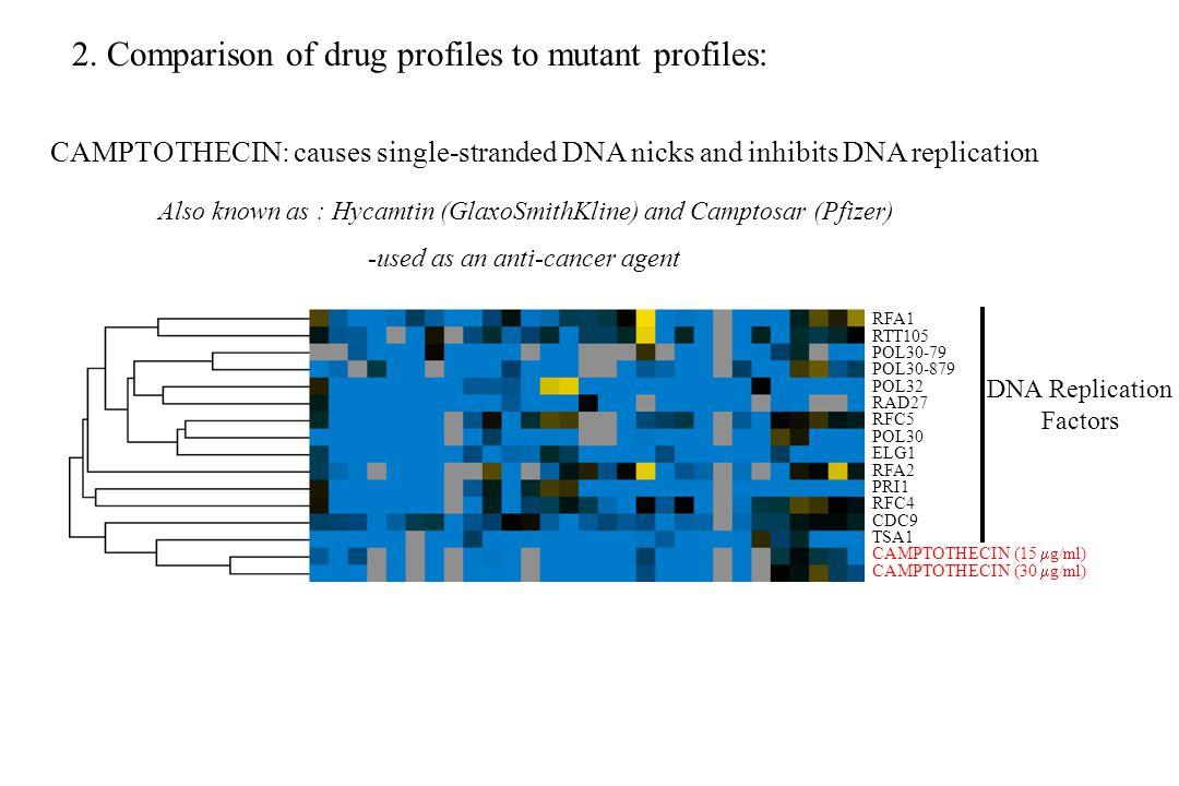 DNA Replication Factors