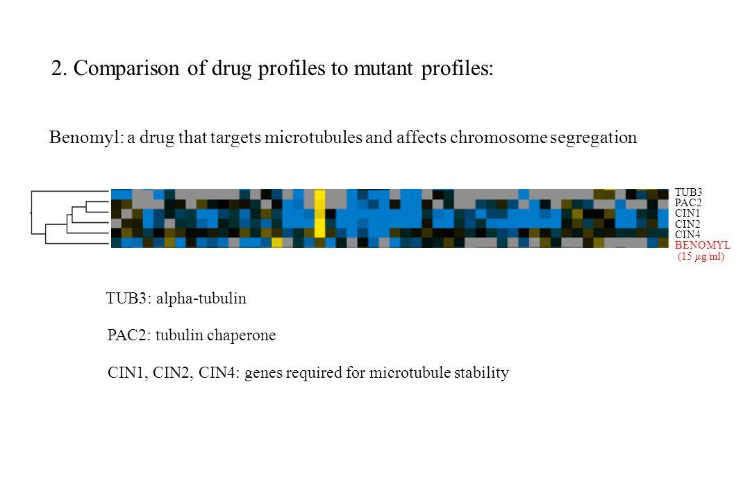 2. Comparison of drug profiles to mutant profiles: