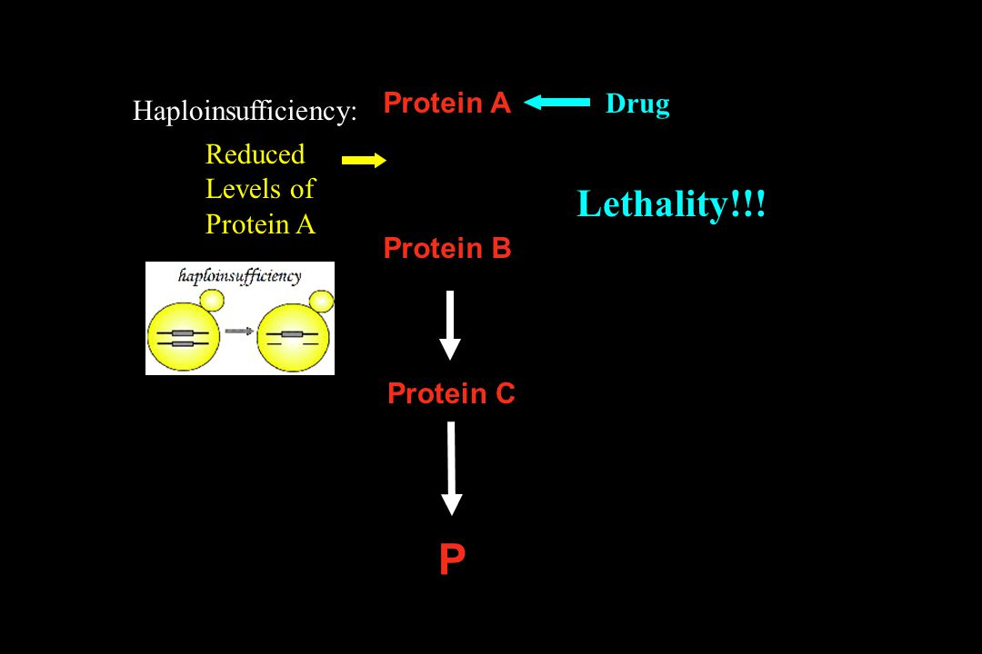 P Lethality!!! Protein A Drug Haploinsufficiency: