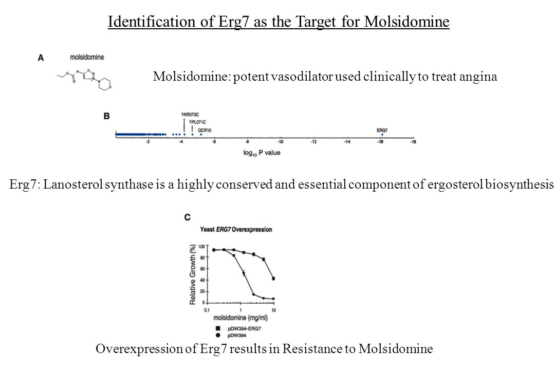 Identification of Erg7 as the Target for Molsidomine